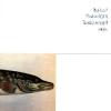 "DUTHOIT, HAUTZINGER, SCHELLANDER, VRBA ""Esox Lucius"" [LP + MP3, 2015]"