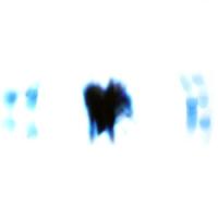 "NIERIKA ""Hydroponicum"" [LP, 2003/2019]"